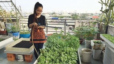 Vườn rau sạch trồng tại nhà của chị Hoàng Phương ở quận Tân Bình.