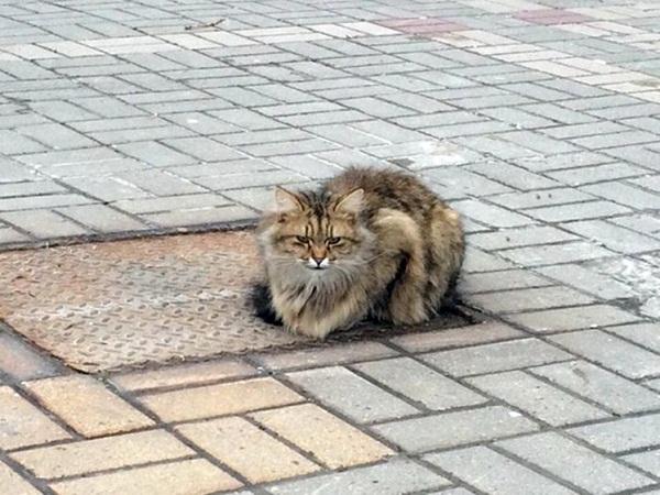 Người dân ở đây cho rằng con mèo ngày nào cũng ra ngồi đợi ở nơi nó bị những người chủ bỏ rơi để mong được chủ nhân đến đón về.