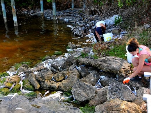 Người dân hỗ trợ thu gom cá chết bị trôi vào bờ. Ảnh: New Times