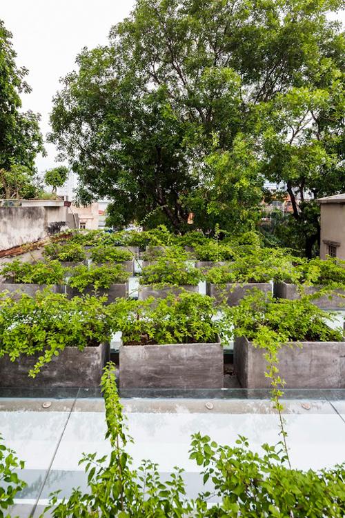 Những bồn hoa giấy được bố trí gọn gàng trên mái là lựa chọn phù hợp vì đây là giống cây ưa nắng, không cần chăm sóc nhiều.