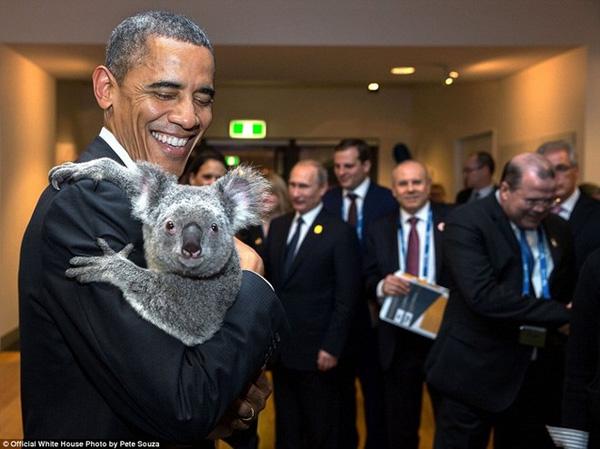 Nâng niu một chú gấu koala trên tay, tổng thống Mỹ cười tươi trước ống kính trong lần tham gia Hội nghị thượng đỉnh G20 tại thành phố Brisbane, Australia hồi tháng 11/2014.