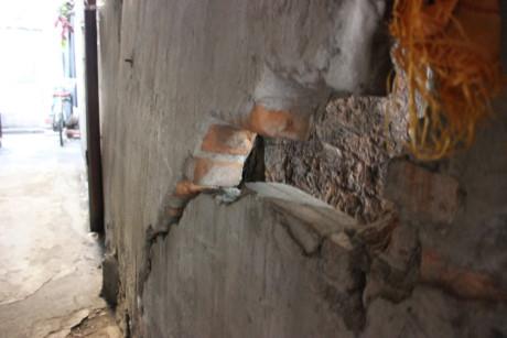 Một mảng tường bị nứt bởi thân cây ngày một phát triển
