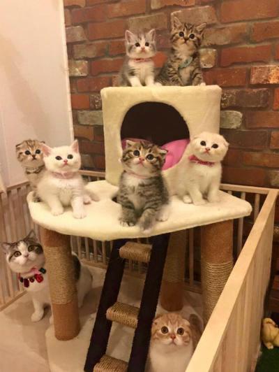 Những chiếc nhà chơi dành cho mèo có giá từ 1,5-2 triệu đồng.