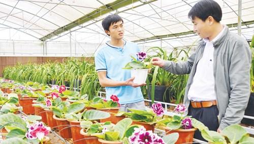Kỹ sư Nguyễn Văn Hoàng (trái) giới thiệu giống hoa chuông tình yêu.