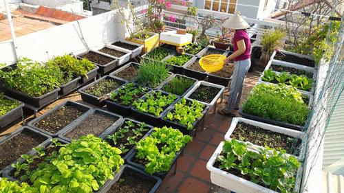 Nhiều người đang sử dụng thuốc trừ sâu tự chế để phun lên rau