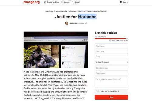 Hơn 70.000 người đã ký vào đơn thỉnh nguyện Công lý cho Harambe yêu cầu truy cứu trách nhiệm của bố mẹ cậu bé lơ là giám sát để con trai rơi vào chuồng khỉ. Ảnh: Mirror