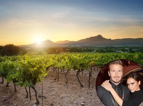 Năm 2008, David Beckham dành tặng Victoria một vườn nho nhân sinh nhật cô. Vườn nho nằm ở thung lũng Napa (Mỹ) - vùng trồng nho nổi tiếng thế giới. Thậm chí, cầu thủ nổi tiếng còn chế biến chai rượu nho mang tên vợ. Giá tiền không được tiết lộ nhưng nhiều người dự đoán David Beckham phải bỏ ra hàng triệu USD.