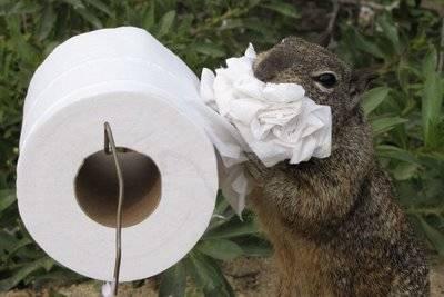 Cũng như chuột, sóc có thể dễ dàng bò vào toilet nhà bạn