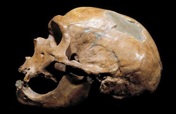 Không chỉ ăn thịt người, người Neanderthal còn sử dụng xương người làm công cụ.
