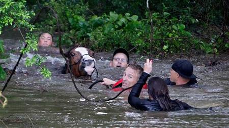 Hơn 70 con ngựa được cứu đưa ra khỏi vùng nước lũ - Ảnh: AP