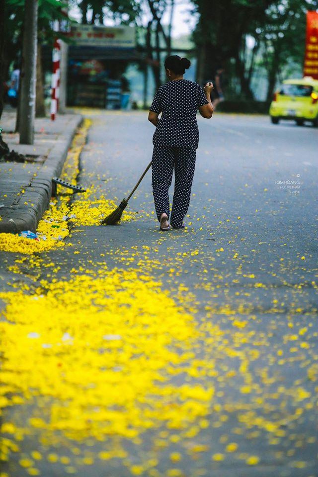 Những cánh phượng rụng đầy dọc các con đường trong TP Huế sau cơn mưa...Ảnh: Tom Hoàng