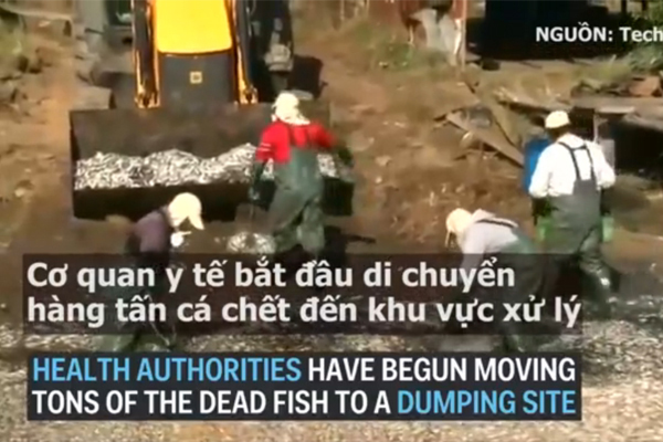 Cơ quan y tế đã phải vào cuộc để xử lý hàng trăm tấn cá chết.