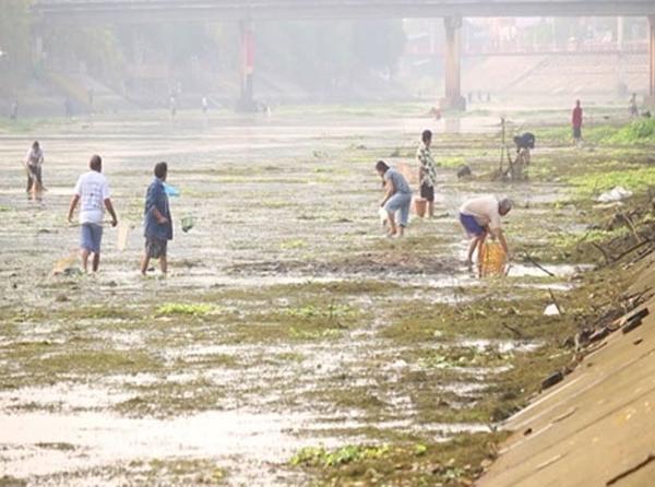 Người dân đi vớt cá chết để mang đi tiêu hủy.