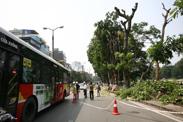 Lực lượng bảo vệ điều tiết giao thông để đảm bảo an toàn khi cắt tỉa