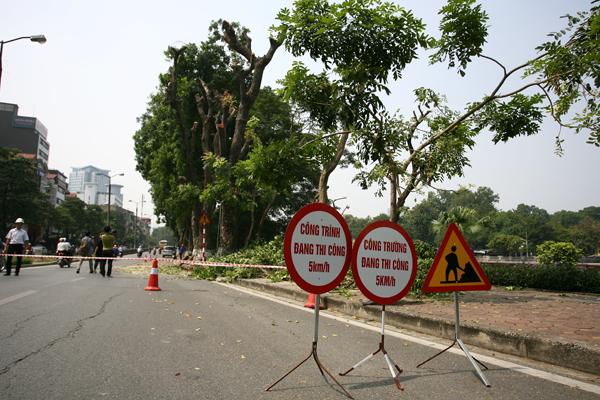 Thời gian đánh gốc chuyển cây sẽ được thực hiện vào ban đêm để đảm bảo an toàn