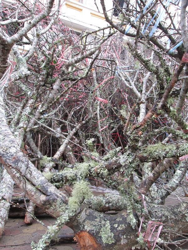 Những cành đào rêu này có giá 5 - 6 triệu.