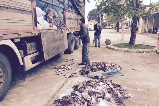 Hơn 20 tấn mực khô hôi thối bị CSGT Thanh Hóa phát hiện, bắt giữ