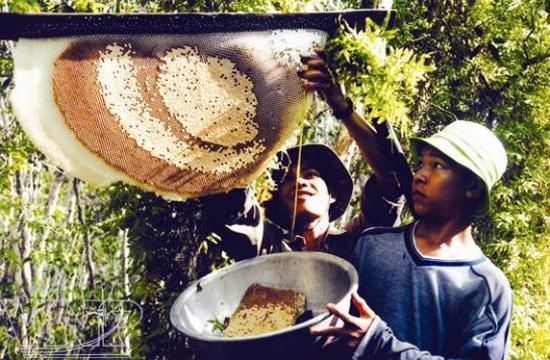 Đi lấy mật ong rừng tràm U Minh. Ảnh: Báo Đất Mũi