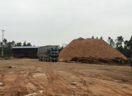 Xưởng gỗ dăm hoạt động trái pháp luật của Cty Minh Long (Tĩnh Gia, Thanh Hóa) vẫn ngang nhiên tồn tại không bị xử lý. Ảnh: Hà Châu