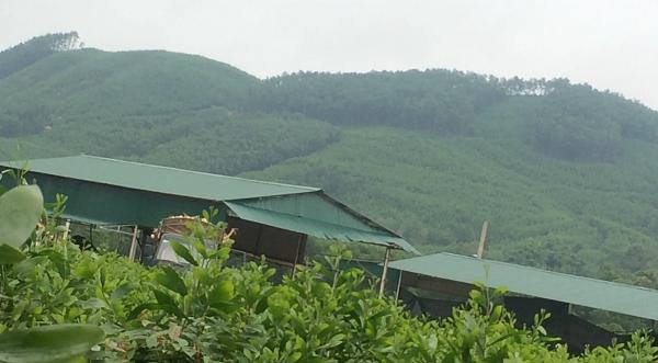 Xưởng gỗ dăm nằm sâu trong rừng của Cty Hoàng Huy. Ảnh: HC