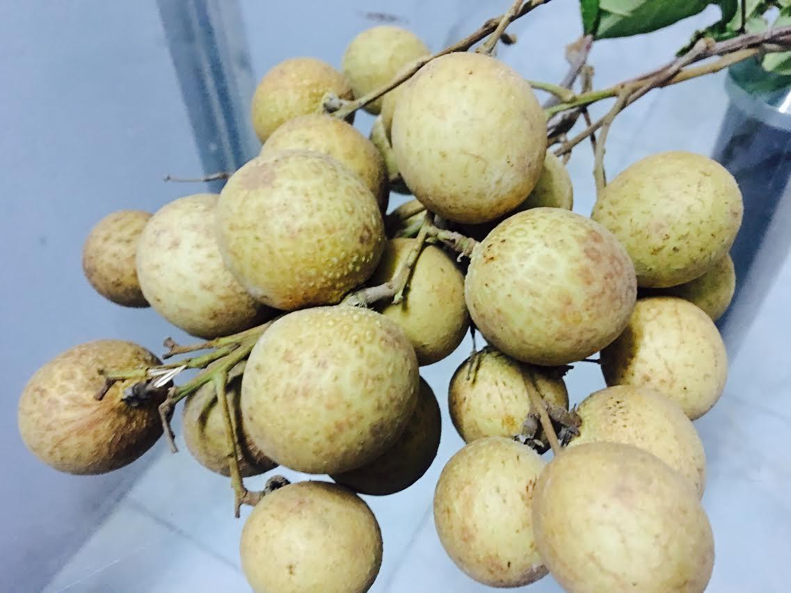 Theo chuyên gia, vỏ loại nhãn có màu vàng sáng là do sử dụng phương pháp dùng lưu huỳnh làm sinh tiết hóa khô nên quả nhãn sẽ có màu sắc bắt mắt hơn màu tự nhiên rất nhiều