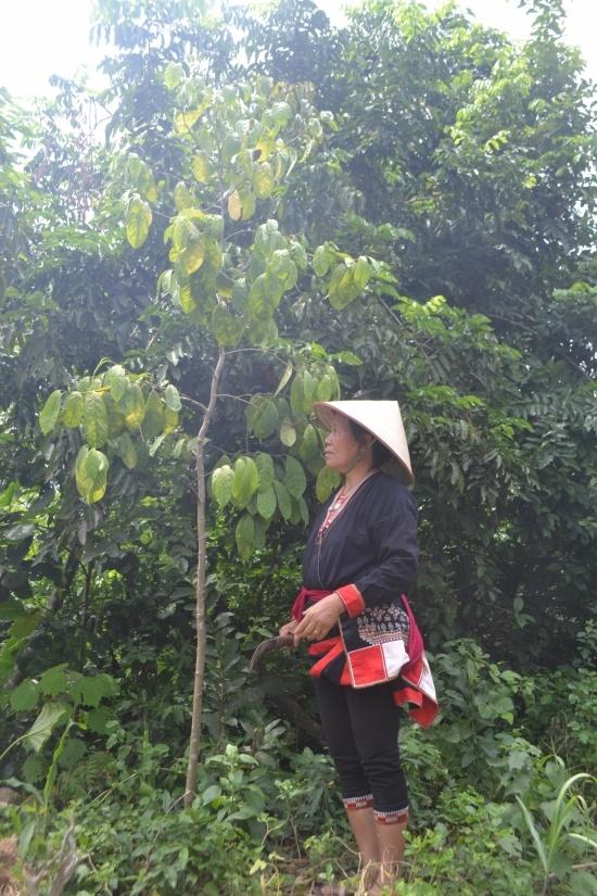Do các loại dược liệu ngày càng hiếm nên lương y Sơn đã phải đưa một số về trồng ở vườn nhà.
