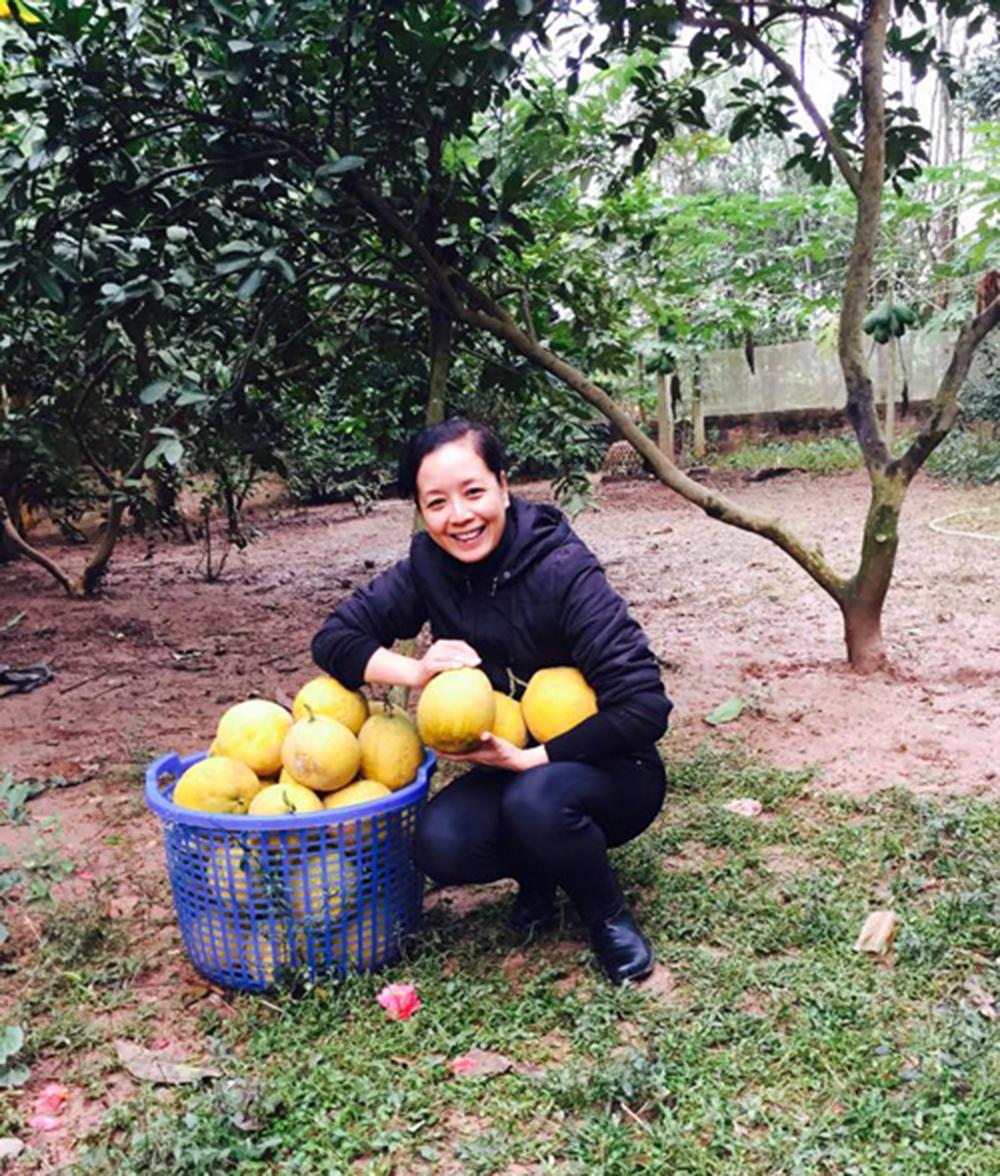 Một rổ bưởi Diễn lớn được chị thu hoạch để chuẩn bị cho Tét âm lịch.