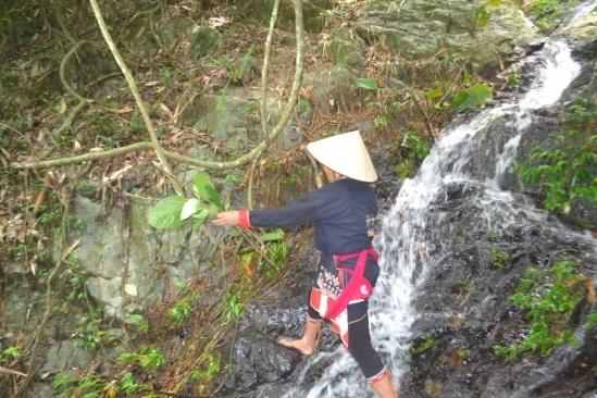 Dù đã 61 tuổi nhưng lương y Sơn vẫn thường ngày trèo đèo lội suối tìm thảo dược.