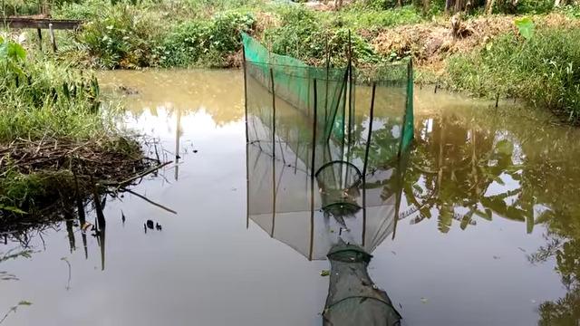Khu vực anh Phước đặt bẫy cá. Ảnh Khôi Nguyên/ Thanh Niên Online.