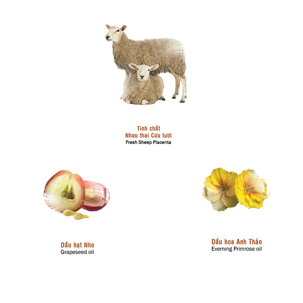 Công thức kết hợp nhau thai cừu, và các chất chống oxy hoá mạnh giúp đẩy lùi quá trình lão hoá da