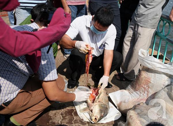 Lực lượng chức năng trước đó đã tiến hành mổ bụng cá lấy mẫu ruột để kiểm nghiệm đưa ra nguyên nhân cá chết hàng loạt. Trong thời gian chờ kiểm nghiệm, các cơ quan chức năng yêu cầu thực hiện đúng quy trình tiêu hủy, tránh để lượng cá chết này bị đưa ra ngoài, tiềm ẩn nguy cơ ảnh hưởng đến môi trường và sức khỏe người dân.