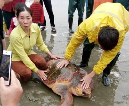 Con rùa nặng hơn 70 kg được trả giá 300 triệu đồng