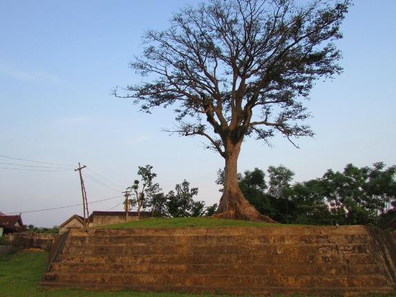 Cây sui đứng sừng sững trên mô đất cao gây nhiều sự chú ý cho nhiều khách vãng lai. Ảnh: H. Hà