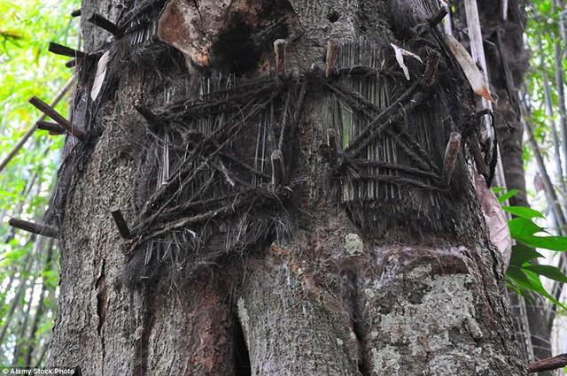 Dân làng sẽ đục thành hố rỗng trong thân cây rồi gói thi thể những trẻ em đã qua đời đặt vào trong đó tạo thành mộ cây.