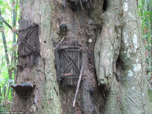 Bên cạnh nghi lễ này, người dân Torajan còn thực hiện nghi lễ chôn cất truyền thống khác như đặt thi thể người quá cố trong hang động trong rừng sâu hoặc đặt trong quan tài được treo trên một vách đá.