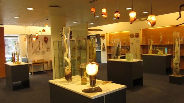 Bảo tàng Phallological nằm ở Reykjavík, Iceland là nơi duy nhất sưu tập và trưng bày các mẫu dương vật của tất cả các loài động vật có vú được tìm thấy.