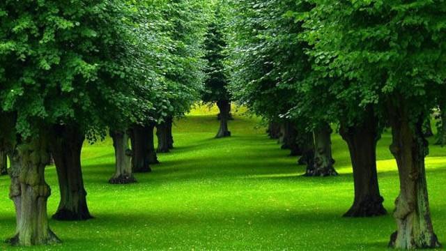 Mỗi ngày, cây xanh chuyển hóa ánh sáng mặt trời thành năng lượng. Lượng năng lượng này gấp 6 lần toàn bộ năng lượng mà con người tiêu thụ.