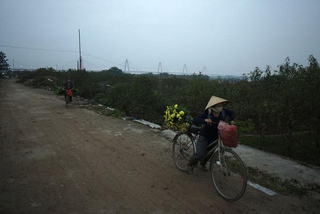 Chiều muộn trên cánh đồng hoa Nhật Tân, lúc này người trồng hoa mới kết thúc ngày làm việc.