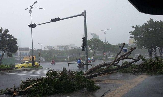 Cây xanh ngã đổ trên đường Nguyễn Văn Linh, dù bão chưa đổ bộ vào đất liền. Ảnh Đức Hoàng