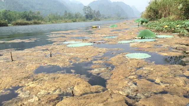Tuy nhiên, rêu chết nổi đầy trên mặt suối cũng gây ô nhiễm