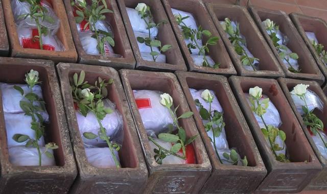 Những hàng tiểu sành xếp dài, đặt hoa trắng.