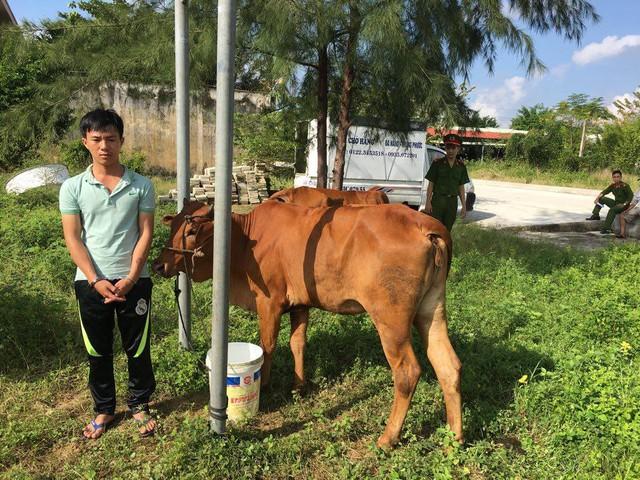 Đối tượng Nguyễn Phước Long và con bò trộm được