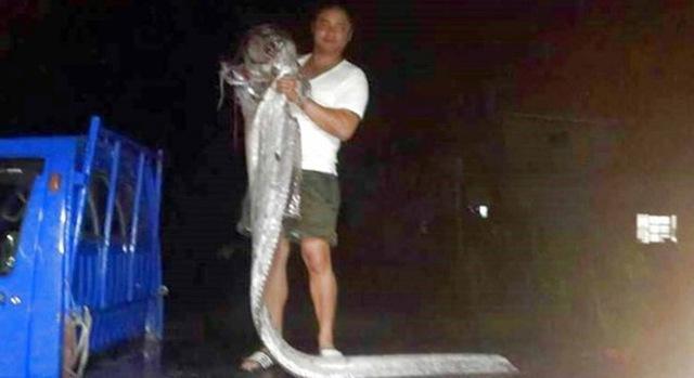 Con cá dài gần gấp đôi người đàn ông.