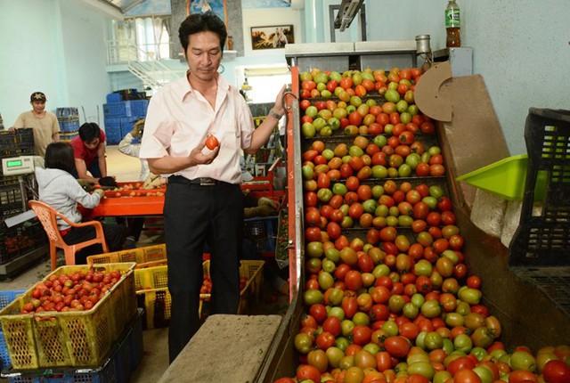 Ông Nguyễn Hồng Chương bên máy rửa, phân loại, hong sấy khô và đóng bóng cà chua. Ảnh: Thạch Thảo