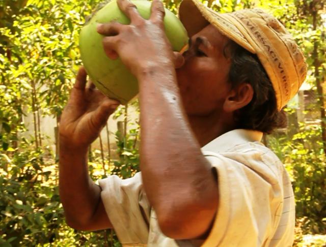 Nắng nóng gay gắt khiến giá dừa tăng chóng mặt
