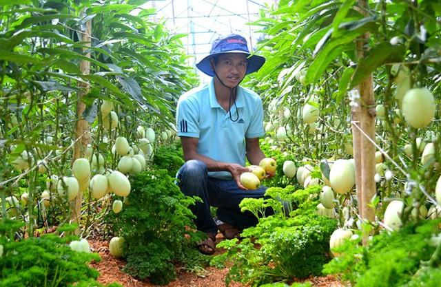 Anh Nguyễn Định bên vườn dưa pepino của gia đình. Ảnh: Thạch Thảo.