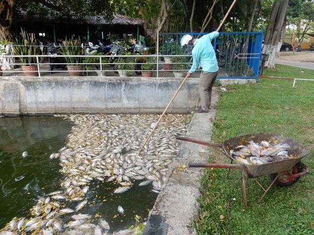 Trong ngày 1/8, công nhân Công ty Thoát nước và xử lý nước thải Đà Nẵng vớt gần 1 tấn cá chết dưới hồ. Ảnh: Đức Hoàng