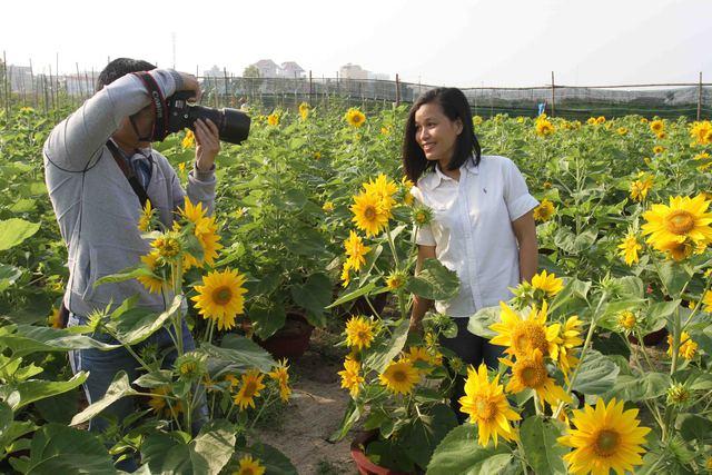 Trước vẻ đẹp của vườn hoa hướng dương, một số bạn trẻ đã xin ông Vũ vào vườn lưu lại những bức ảnh đẹp...