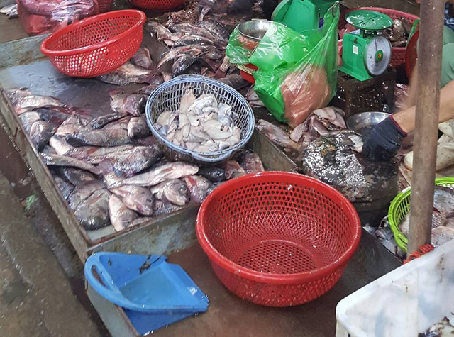 Cá được sơ chế trong điều kiện không đảm bảo vệ sinh. Ảnh: Cao Tuân