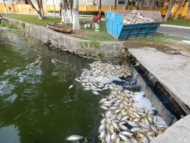 Một số cống nước thải trực tiếp thải nước ra hồ Công viên 29-3 với mùi hôi khó chịu. Ảnh: Đức Hoàng